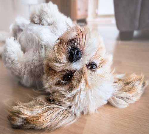 Pet-Friendly-Flooring-img1